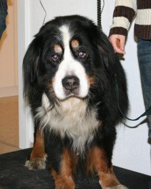 Dogs pictures / fotografije pasa Hund-wird-gewogen